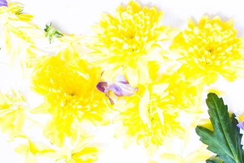 Femke's Flowers